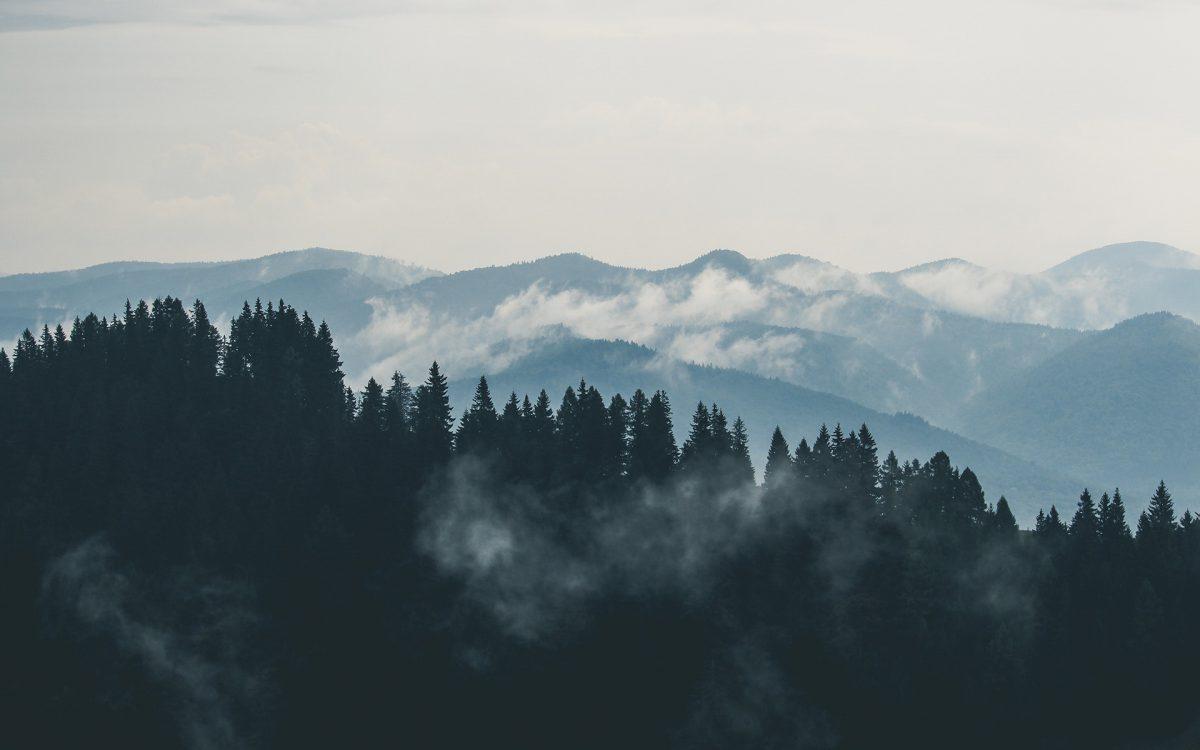Coucou je suis le texte alternatif. par exmple je pourrais mettre : Chaine de montagne arboré. ©nomdu photographe